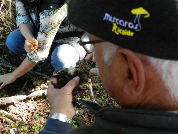 Passeio micológico mostra variedade de cogumelos da região Crédito: Giuliana Miranda