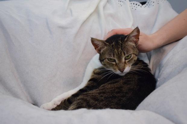 Visitantes podem interagir com os gatinhos | Imagem: Giuliana Miranda
