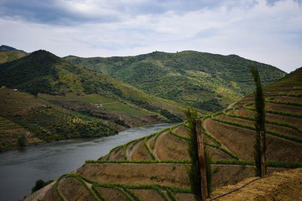 A região demarcada do Douro, no Norte de Portugal, concentra uma boa parte das experiências vinícolas | Crédito: Giuliana Miranda/Folhapress